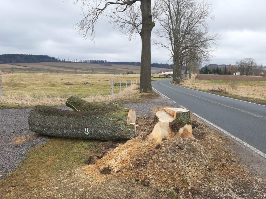 Dlaczego uważam, że drzew w ogóle nie powinno się już wycinać