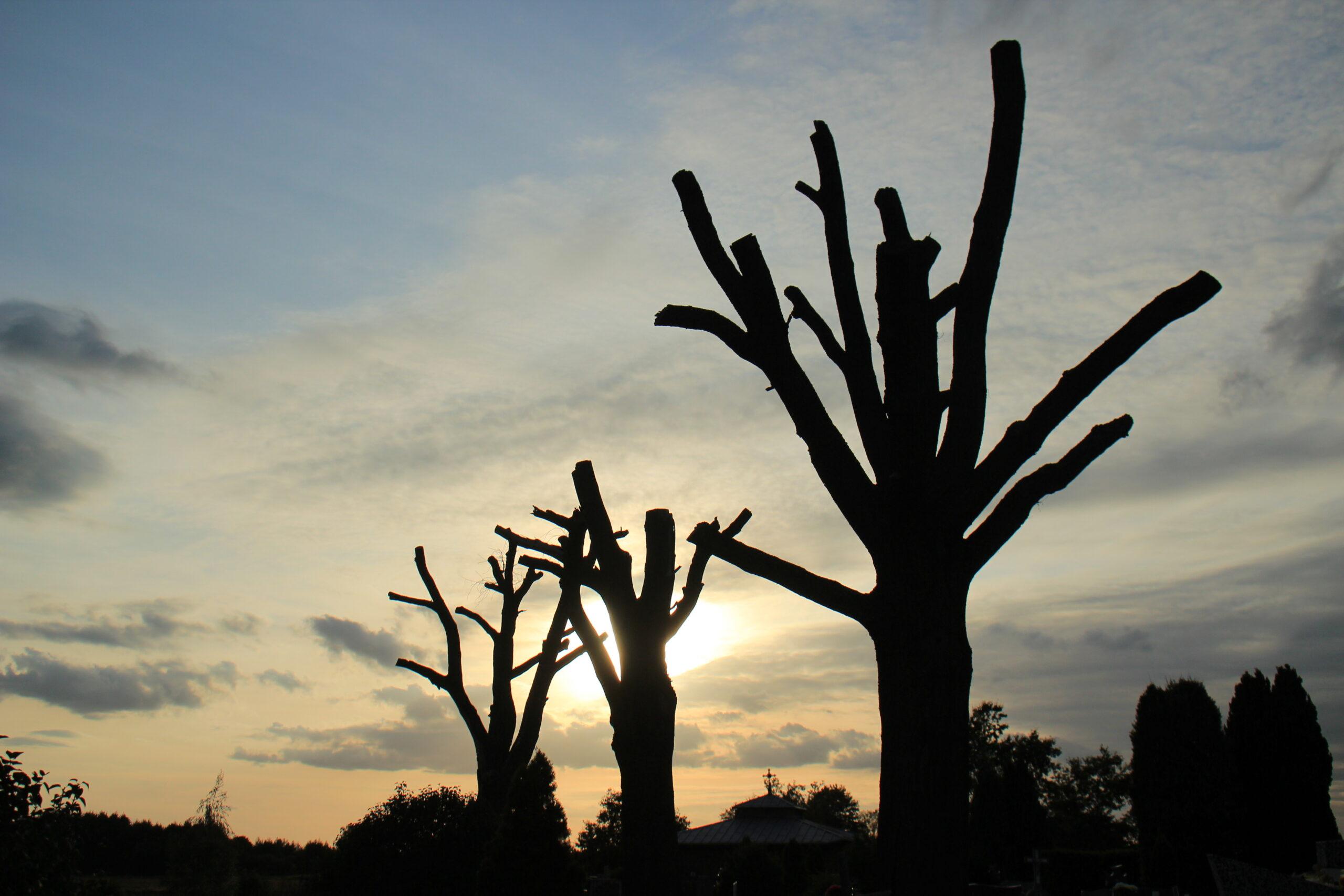 Zakończenie rzezi drzew w Polsce jest możliwe. Wprowadźmy moratorium na ich wycinkę!