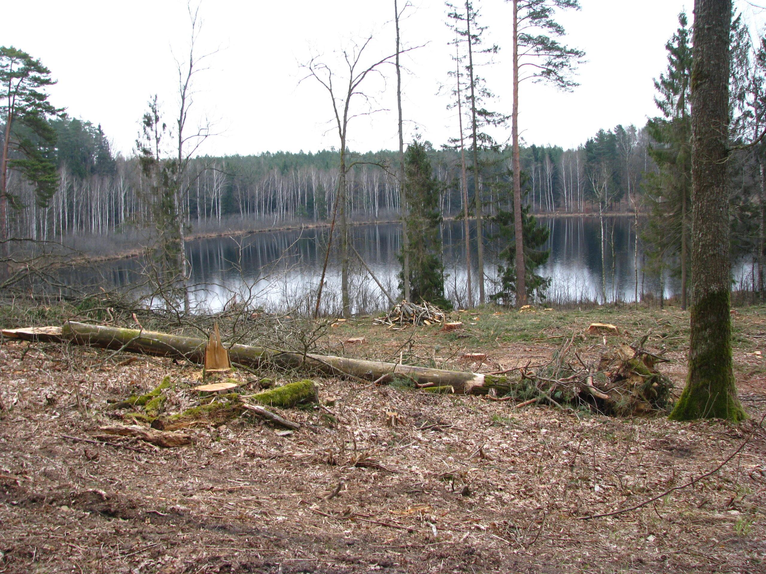 Audytorzy potwierdzają zgłoszone przez FOTA4Climate krytyczne uwagi dotyczące zabronionych zabiegów w lasach Warmii i Mazur