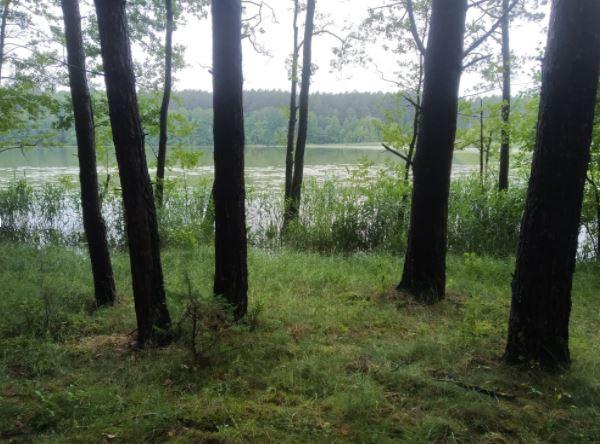 Typowy las wodochronny w okolicach Olsztyna (fot. Adam Bohdan)